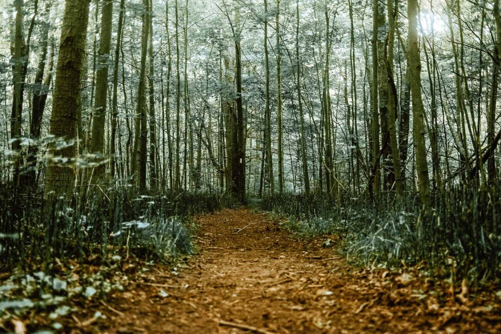Lowland Swamp Forest Footpath at Forks of the Credit Provincial Park