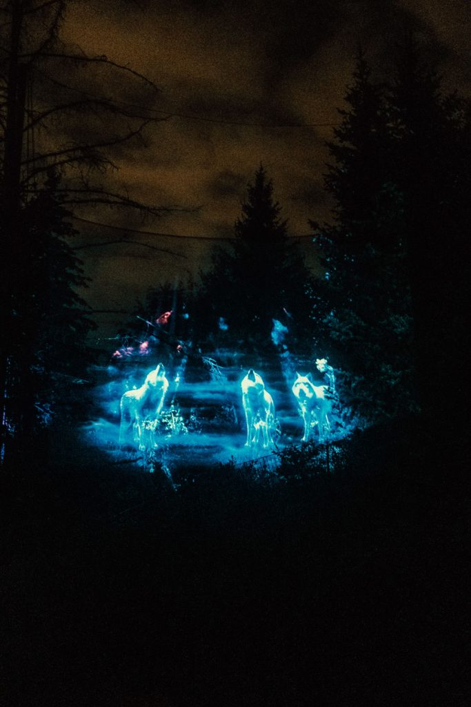 Wolve's Welcome Light projection at the Terra Lumina event at the Toronto Zoo