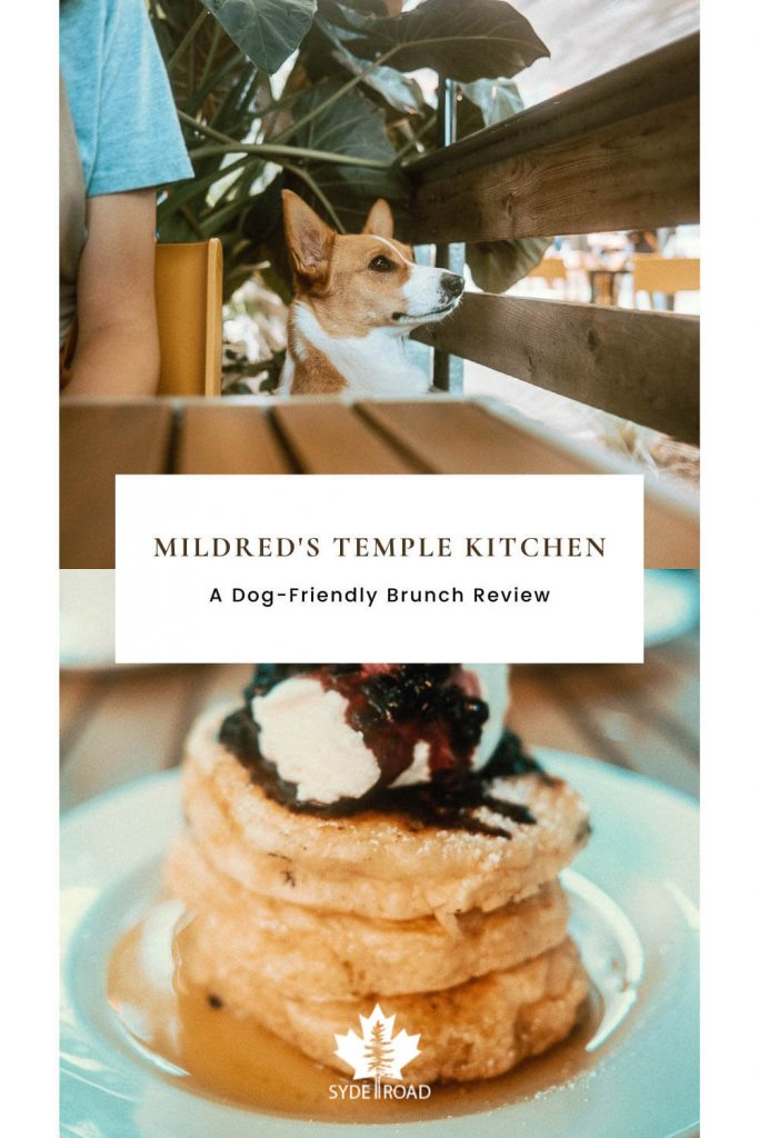 Top: Corgi standing up with head above the table watching something in the distance. Bottom: Stacked pancakes with blueberry compote - a specialty at Mildred's Temple Kitchen