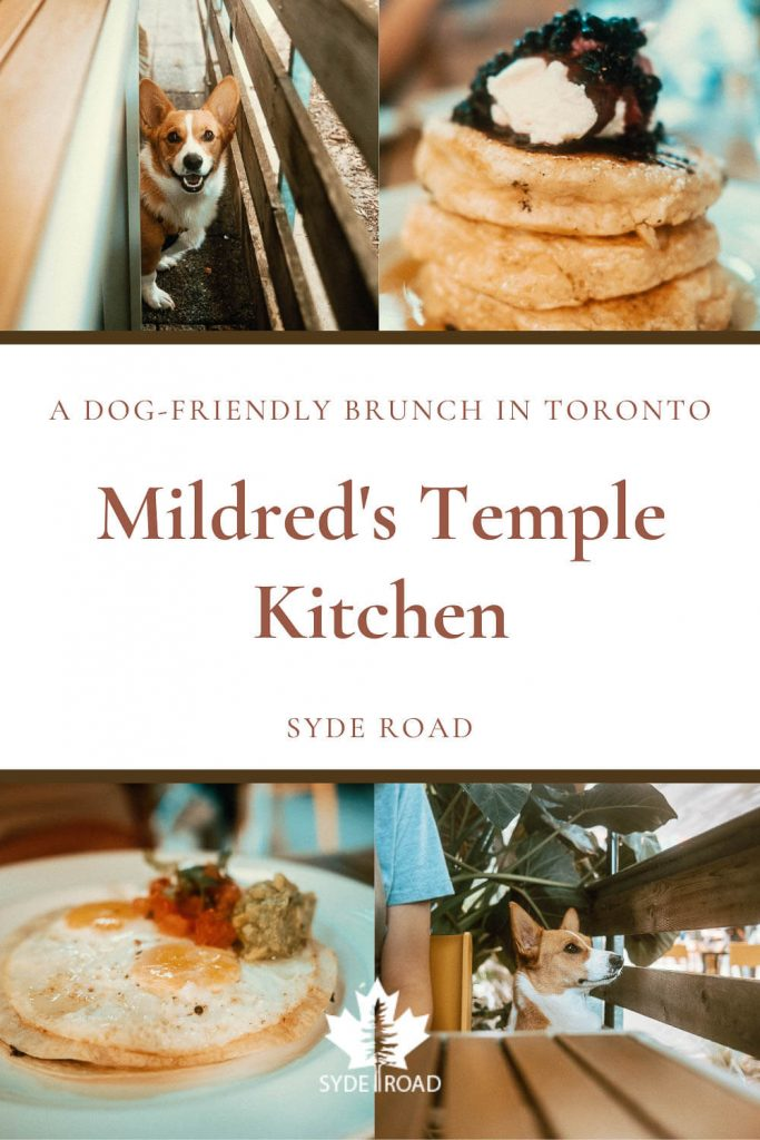 Top-Left: Smiling corgi between a table and wooden fence. Top-right: Stack of pancakes with whipped cream and wild blueberry compote - a specialty at the dog-friendly Mildred's Temple Kitchen in Toronto. Bottom-left: 2 sunny side up eggs on top of a flour tortilla with avocado, sour cream, and diced tomatoes. Bottom-right: upright corgi with head above table looking into the distance through a wooden fence.