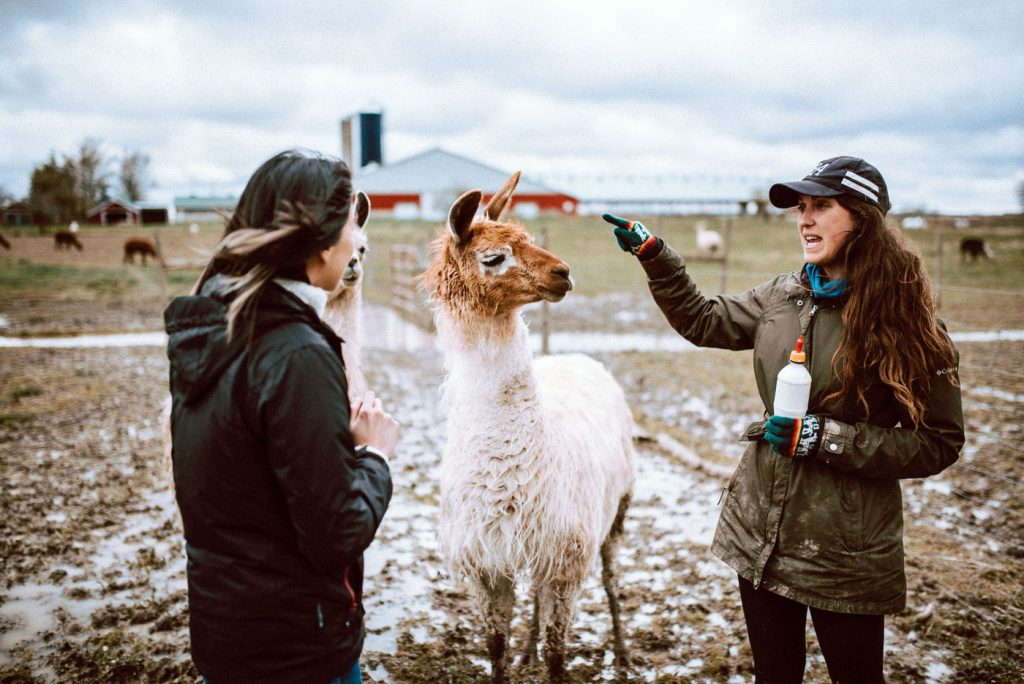 S.A.M.Y's private tour of the farm includes learning about how to take care of alpacas