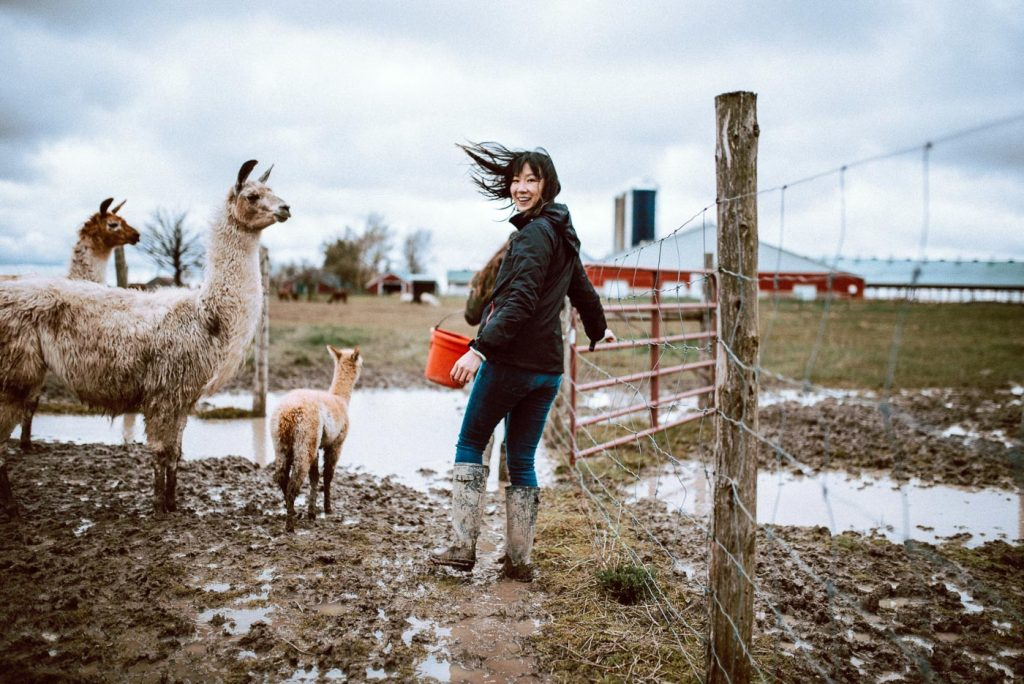 S.A.M.Y's alpaca walking tour - getting ready to feed the alpacas and llamas