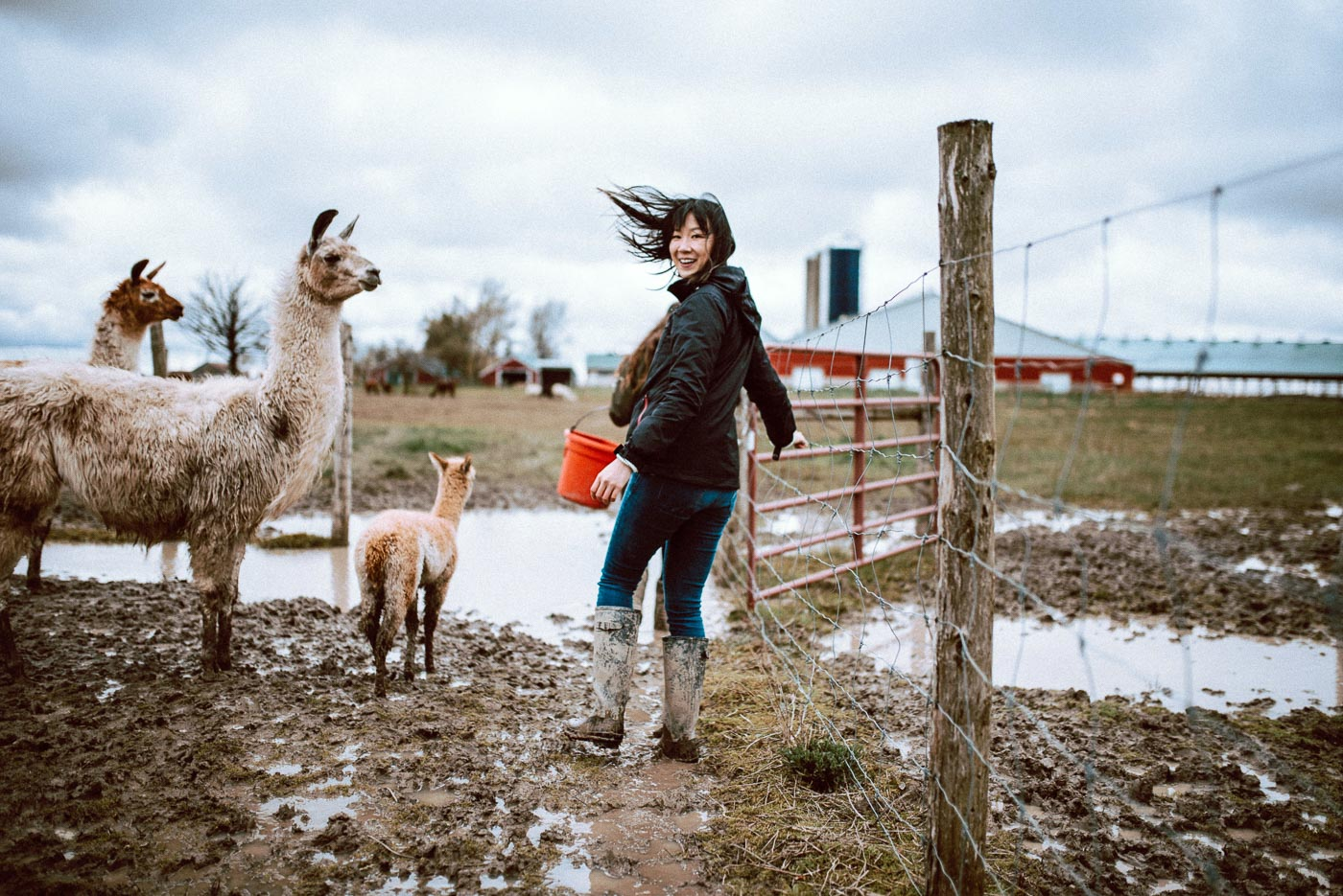 Places in Ontario Where You Can Stay with Alpacas