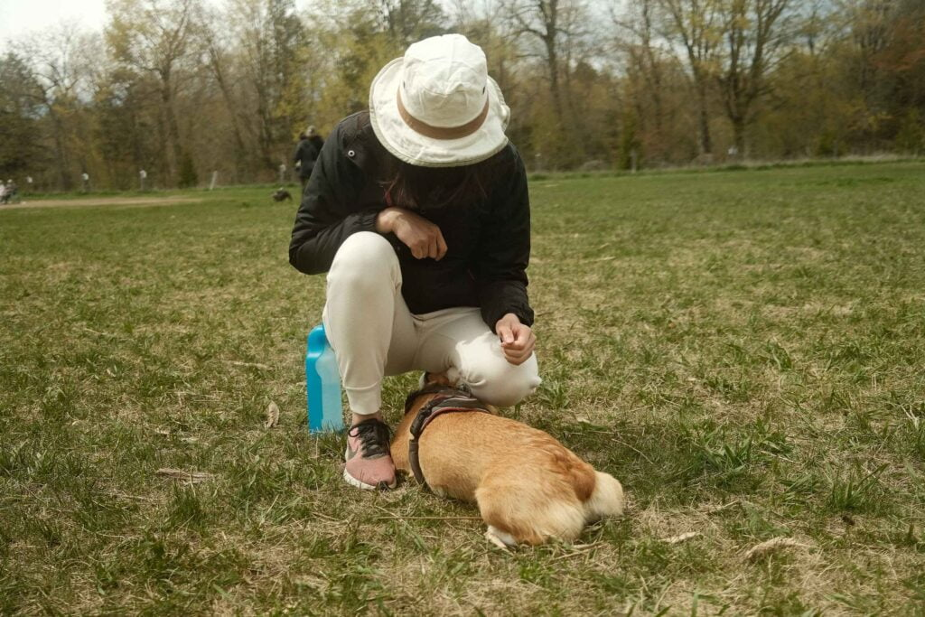 Woman wearing a sun hat bending down and caressing her corgi on a field at Harmony Valley Dog Park