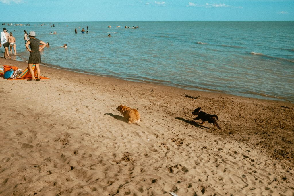 Two dogs running on the beach at Long Point Provincial Park Dog Beach