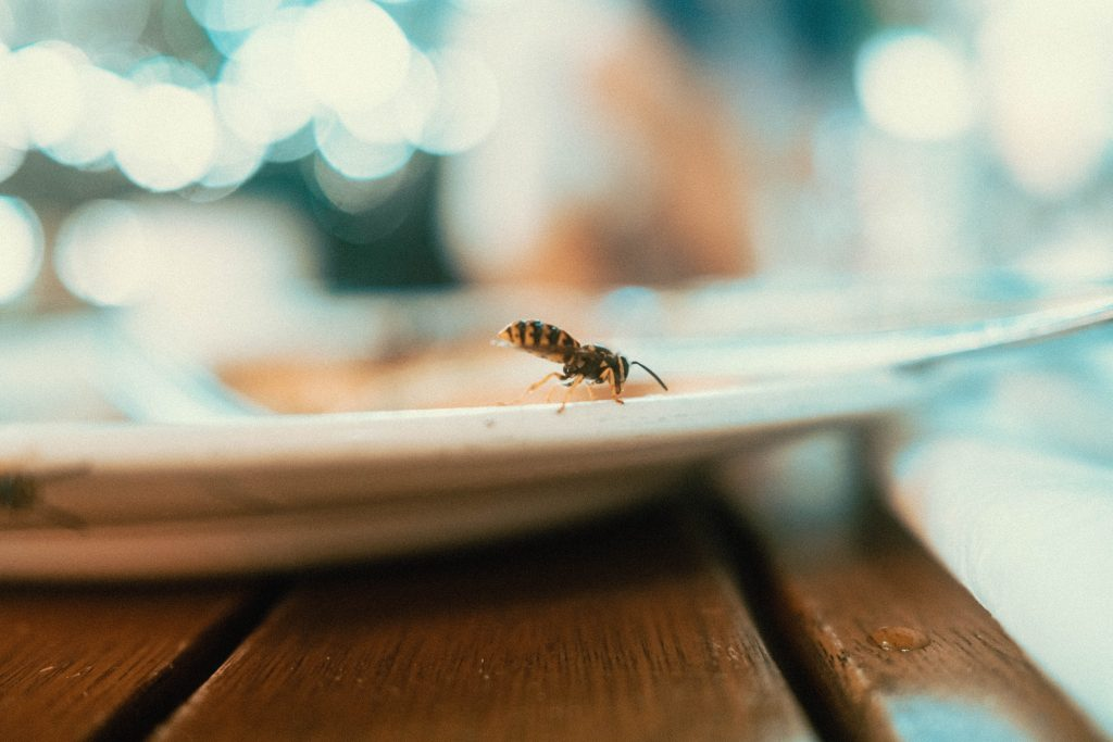 Wasp walking on a plate