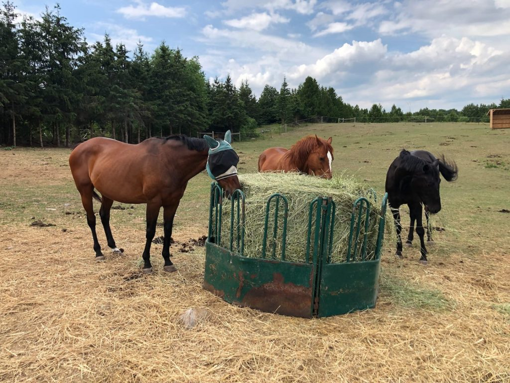 Humble Ranch - Horses on Property