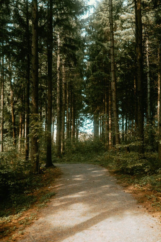 Forest Trail in one of Guess Where Trip's Itinerary - Outdoor Adventures & Scenic Roads